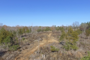 Hwy 71 Timber Investment and Recreational Land in Abbeville, SC (5 of 7)