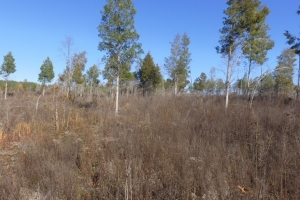 Hwy 71 Timber Investment and Recreational Land in Abbeville, SC (7 of 7)