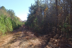 Recreational Land and Homesite - Abbeville County SC