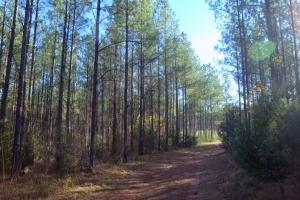 Recreational and Timber Investment - Abbeville County SC