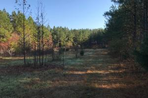 Recreational and Timber Investment with Creek - Abbeville County SC