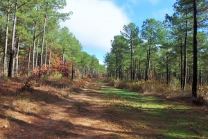 Timber Investment & Recreational Land - Anderson County SC