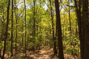 Liberty Hill Recreational Hardwoods - Kershaw County SC