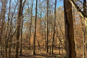 Hardwoods and Creeks Near Tugaloo River in Oconee, SC (6 of 29)