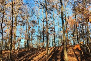 Hardwoods and Creeks Near Tugaloo River in Oconee, SC (10 of 29)