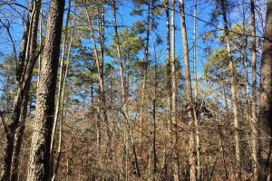 Hardwoods and Creeks Near Tugaloo River in Oconee, SC (25 of 29)