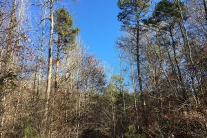 Hardwoods and Creeks Near Tugaloo River in Oconee, SC (28 of 29)