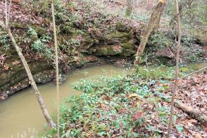 Hardwoods and Creeks Near Tugaloo River in Oconee, SC (4 of 29)