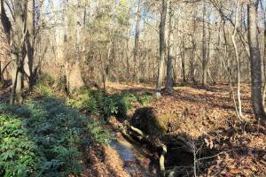 Hardwoods and Creeks Near Tugaloo River in Oconee, SC (8 of 29)