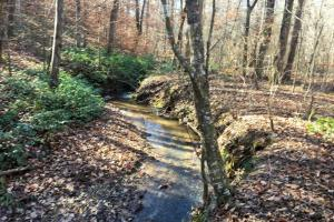 Hardwoods and Creeks Near Tugaloo River in Oconee, SC (7 of 29)