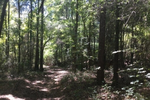 Land for sale in AL,hunting land for sale in AL,Investment land for sale in AL (3 of 7)