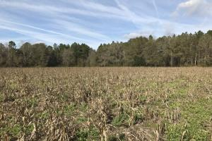 Alma Small Acreage - Bacon County GA