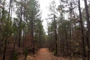 Lancaster Timber Investment and Hunting Land - Lancaster County SC