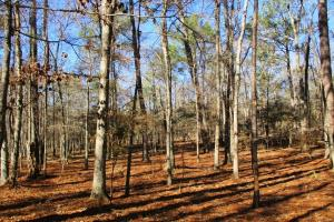 20 Acres Hunting/Timber Land - Clay County GA