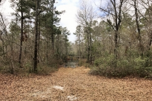 Olar Hwy 301 Hunting Tract - Bamberg County SC