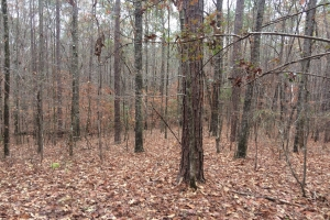 Tuscaloosa County Sealed Bid Sale - Tuscaloosa County AL