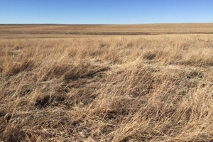 Cheyenne County CRP - Income Producing - Cheyenne County CO
