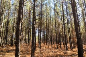 Hunting and Recreational Land - Wilkes County GA