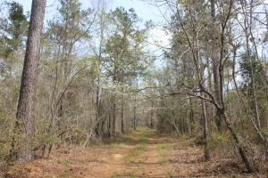 Bonneau 5 Acres - Berkeley County SC
