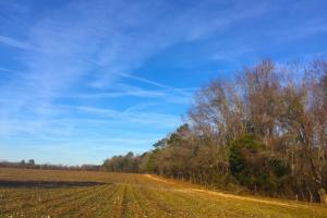 Lamar Recreational and Tillable Farmland - Darlington County SC