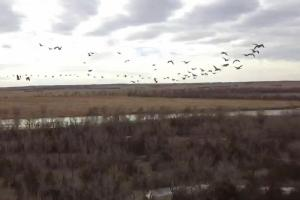 Geese flying over the Platte River. (17 of 27)