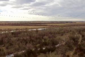Geese flying over the Platte River. (18 of 27)