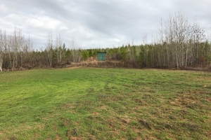 Mud Creek Timber Investment & Hunting Land