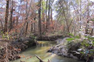 Fort Gaines Creek Front Homesite - Clay County GA