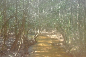 West Monroeville Hunting Tract - Monroe County AL