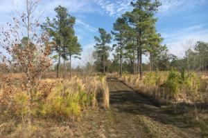 Wahee Hunting Property - Marion County SC