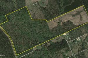Walker County Wooded Development / Investment Property