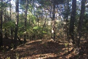 Recreational, Timberland, Homesite near Tupelo - Pontotoc County MS