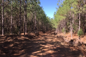Snow Bottom Rd. 118 Acre Timber Tract - Webster County MS