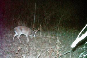 Copiah County hunting property in Copiah, MS (13 of 30)
