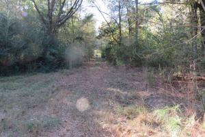 Copiah County hunting property in Copiah, MS (7 of 30)
