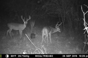 Copiah County hunting property in Copiah, MS (18 of 30)