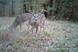 Copiah County hunting property