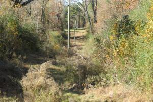Copiah County hunting property in Copiah, MS (23 of 30)