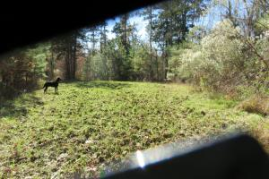 Copiah County hunting property in Copiah, MS (24 of 30)
