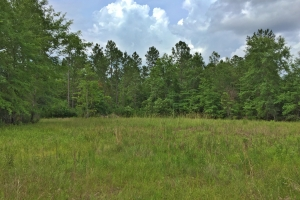 The Saraland Celeste Road Tract - Mobile County AL