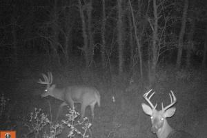 Trophy KS Whitetails with Income in Wabaunsee, KS (19 of 34)