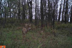 Trophy KS Whitetails with Income in Wabaunsee, KS (3 of 34)
