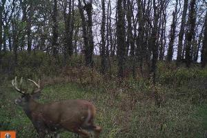 Trophy KS Whitetails with Income in Wabaunsee, KS (4 of 34)