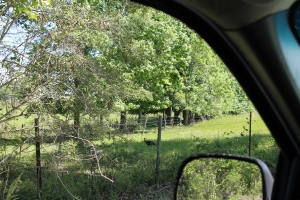 Earlville Road Investment Tract B - Mobile County AL