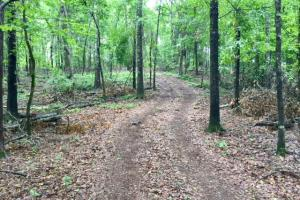 Ellaville Hunting and Timber Tract