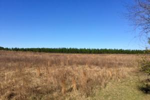 Ellaville Hunting and Timber Tract - Schley County GA