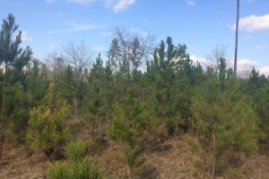 Fort Stewart Timber Property or Homesite