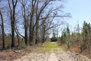 Olar Longleaf Hunting Estate