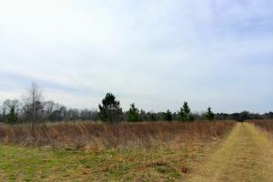 Lamar Hunting Land - Darlington County SC