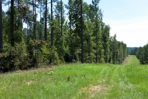 North Augusta Recreation & Timber Investment - Edgefield County SC